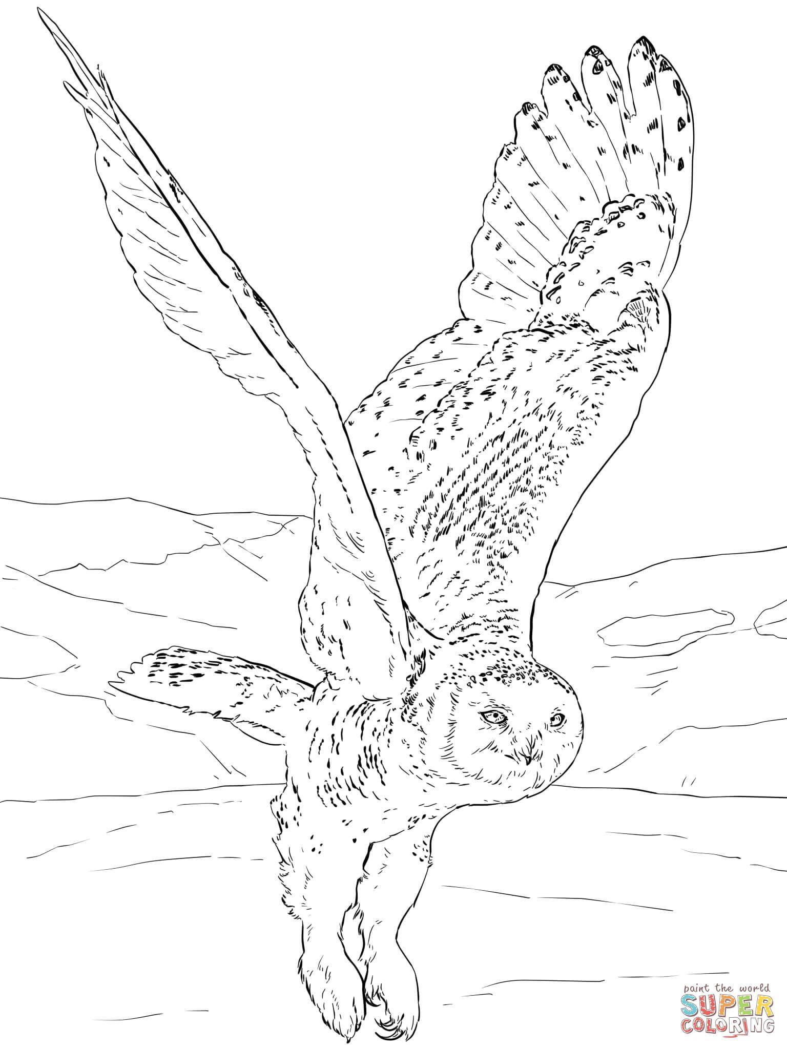 Pin de Małgorzata Kitka en Coloring pages - Owls | Pinterest | Volar ...