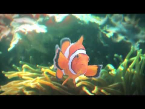 National Aquarium Commercial: Father and Son