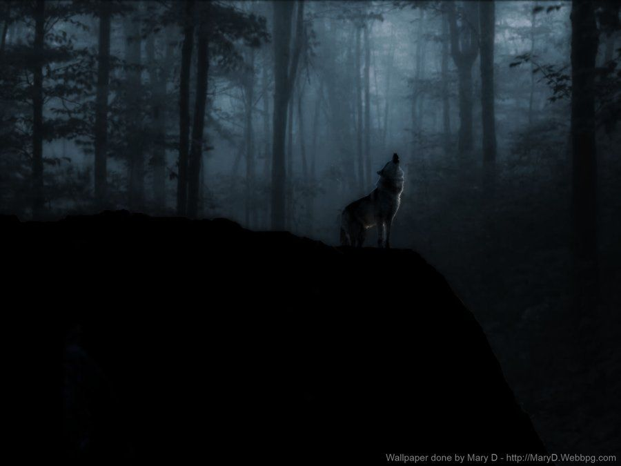 Lone Black Wolf Wallpapers HD Resolution Nythemes 1920x1080 38
