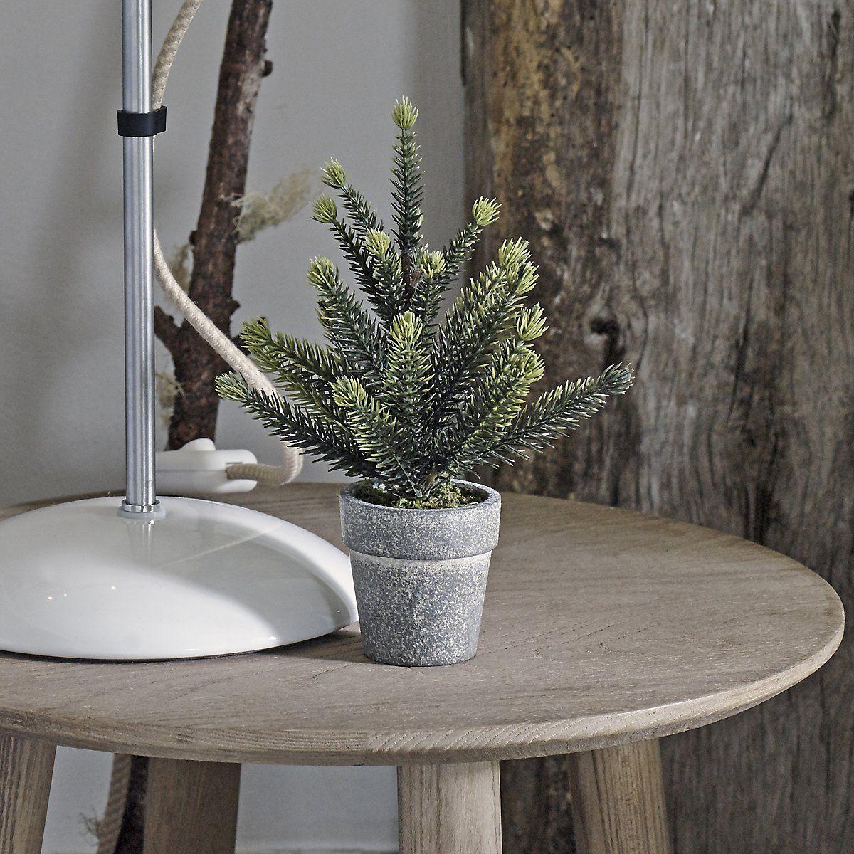Mini Potted Spruce - Set of 2 | The White Company UK