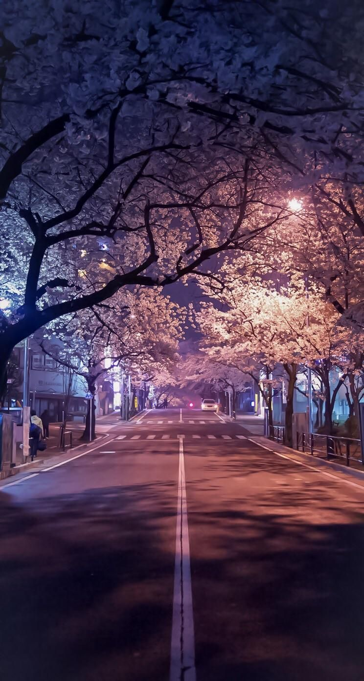 Cherry Blossoms At Night Japan Beautiful Wallpaper Pinterest