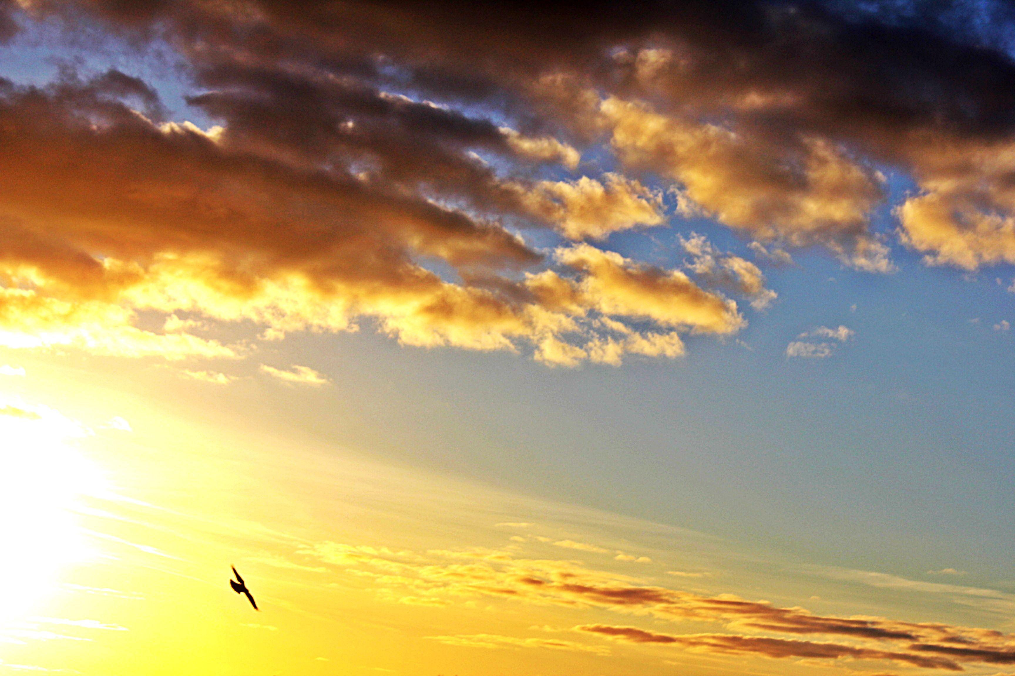 Aurinko ja lintu