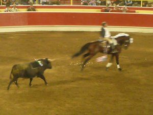 bullfighting in california usa | distinct type of bloodless bullfighting is practiced in california s ...