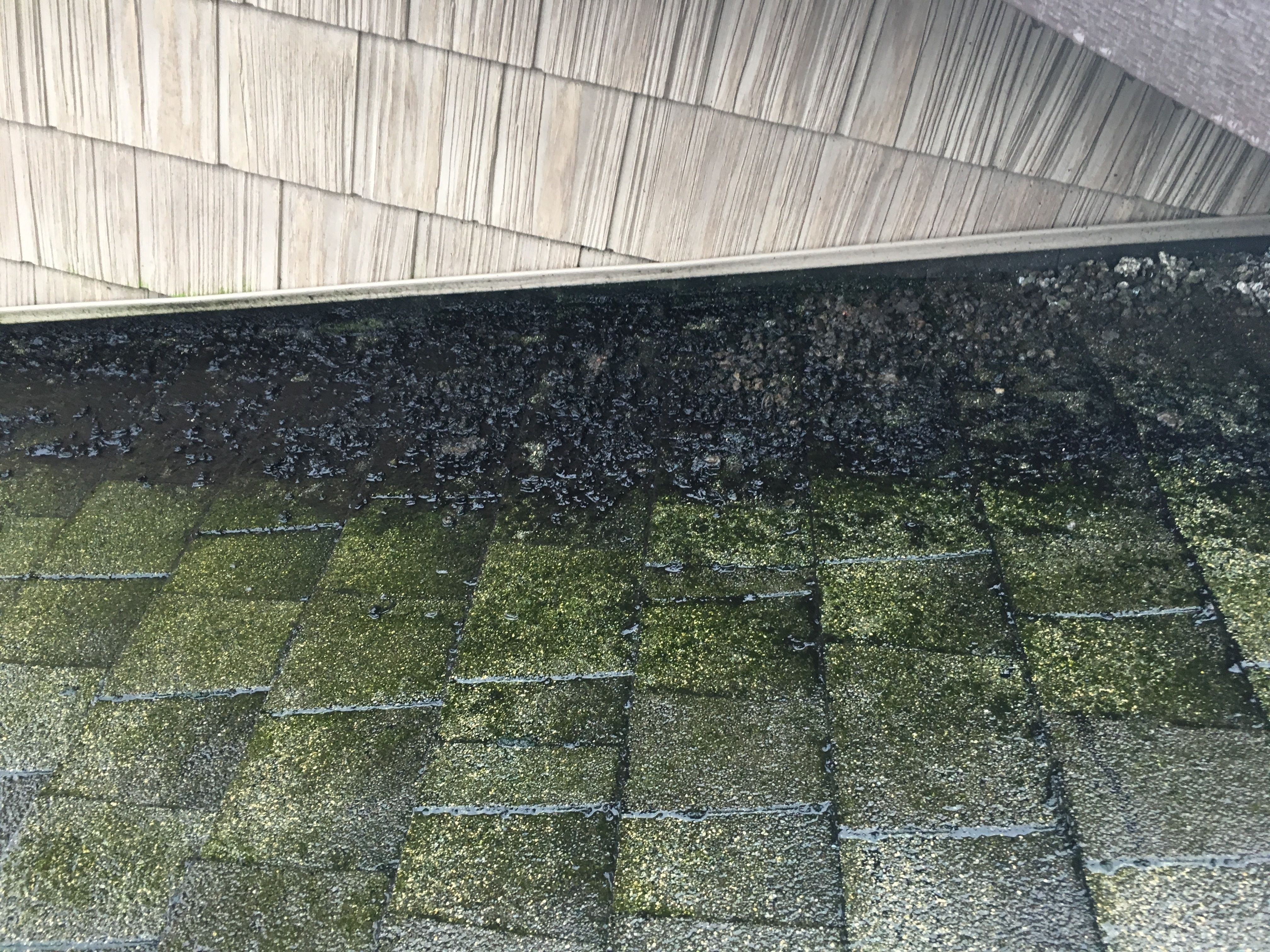 Bird Droppings And Damage We Specialize In Flat Roof Systems Relevant Roofing Are Roofing Specialists I Roofing Specialists Roof Restoration Flat Roof Repair