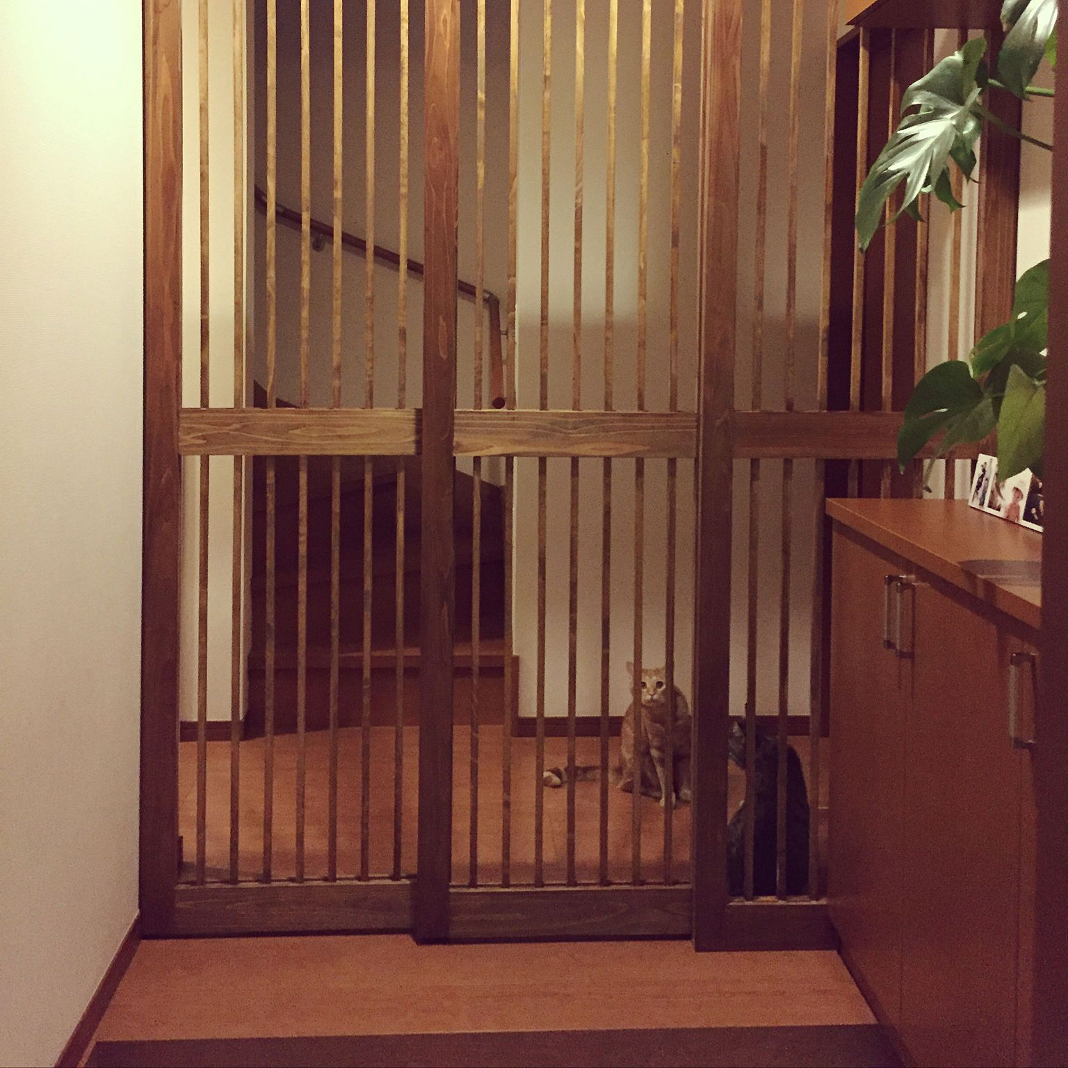 玄関 入り口 玄関からの景色 脱走防止柵 脱走防止扉 猫 などの