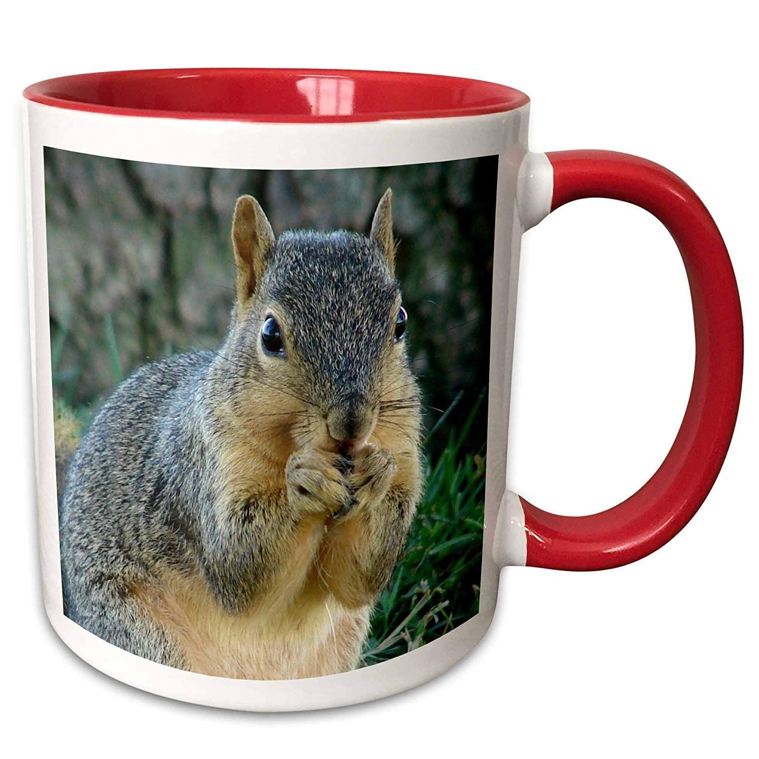 An Adorable Squirrel For That Morning Cup Of Coffee To Get Your