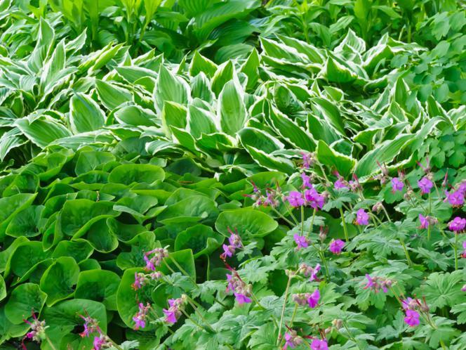 Ogrod W Cieniu Jak Urzadzic Ogrod W Zacienionych Miejscach Murator Pl Garden Forest House Outdoor
