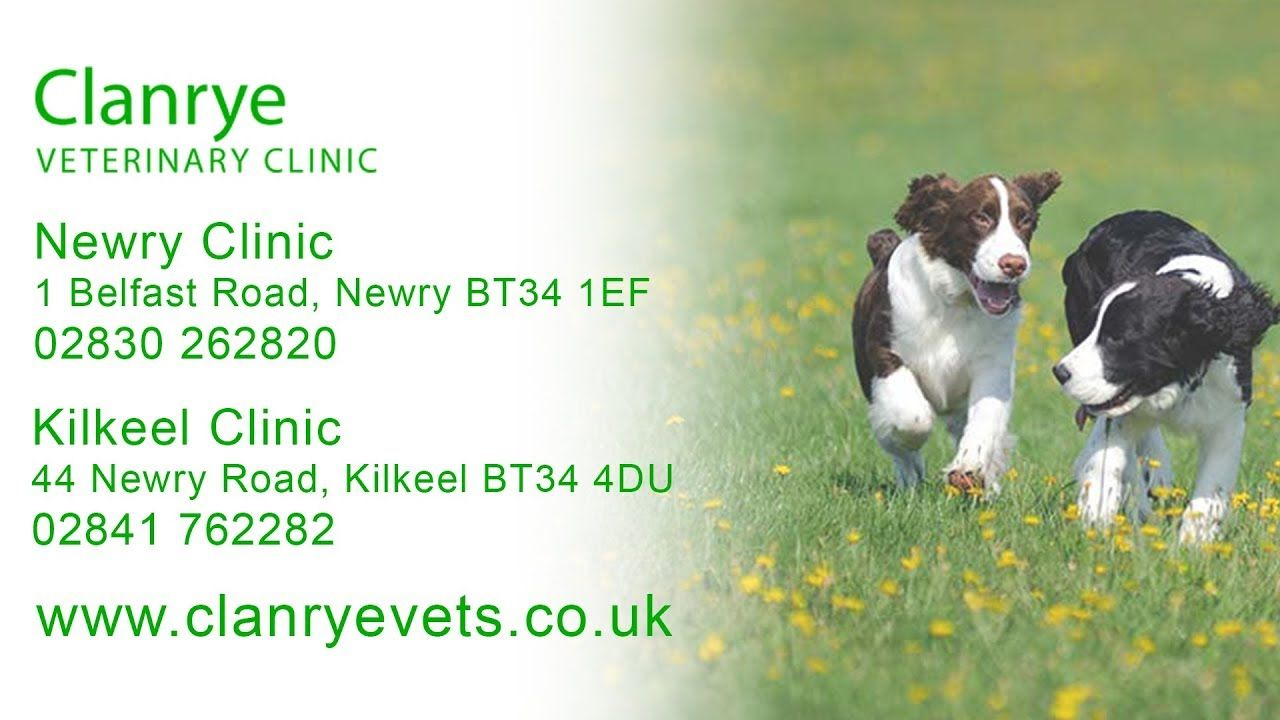 Clanrye Veterinary Clinic Veterinary Practices In Newry And Kilkeel J Veterinary Clinic Veterinary Clinic