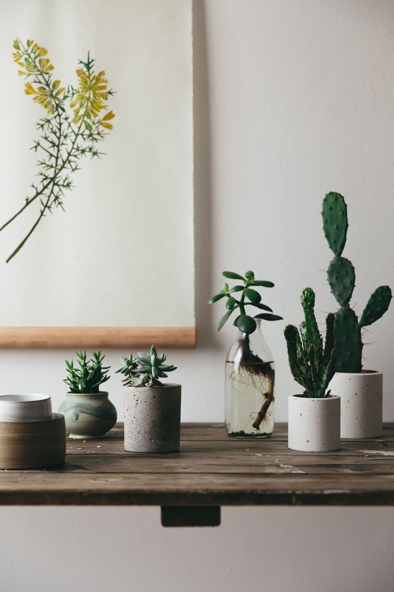 Botanical Details and Plant Styling. How to create a perfect plant ...