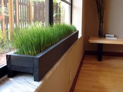Windowsill Planter With Grass For The Cat!