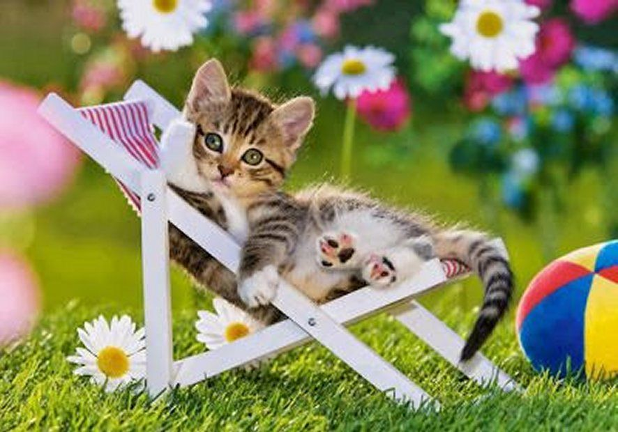 Cute Little Kitten Sunbathing