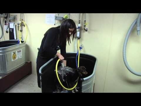 Douglas Feed Pet Supply Dog Wash Pet Grooming Self Serve Dog