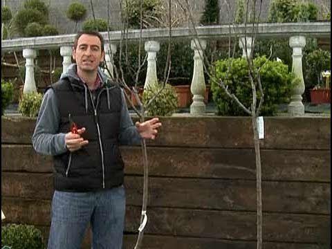 Cómo podar un árbol - YouTube