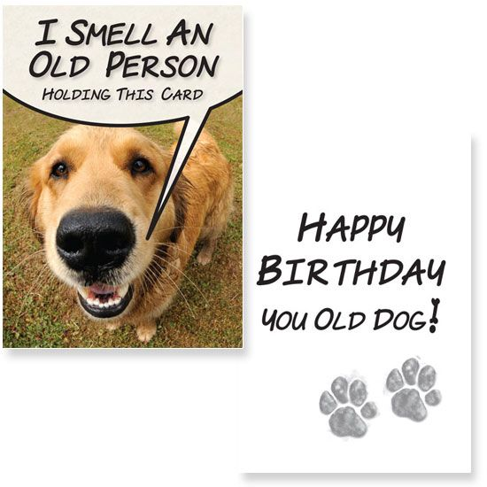 Happy birthday you old dog – Birthday Card from Dog