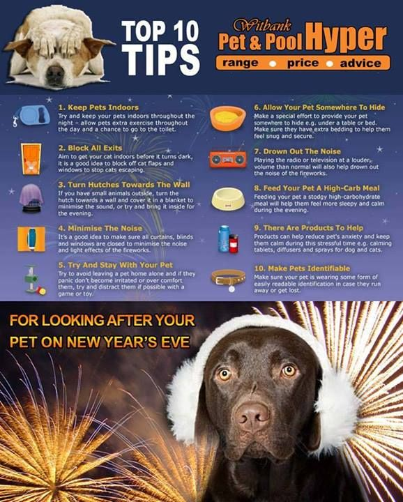 Be Careful And Protect Your Pets Here Are 10 Tips On How To Look After Your Pet On New Year S Eve Petcare Fireworks Your Pet Pets Pet Care Tips