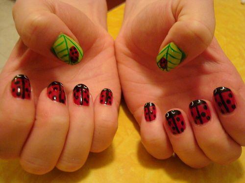 lady bugs l ladybug