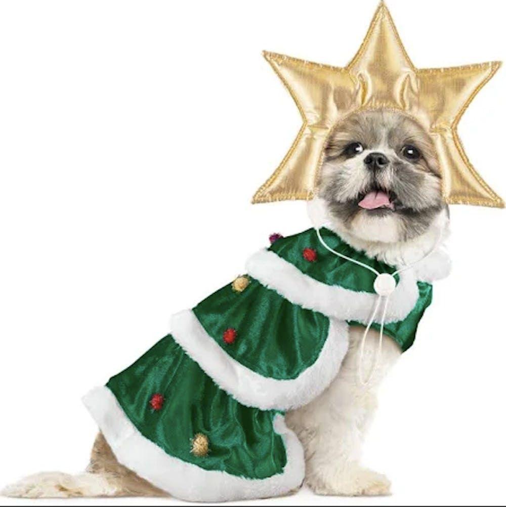 20+ Dog Christmas Costume Ideas