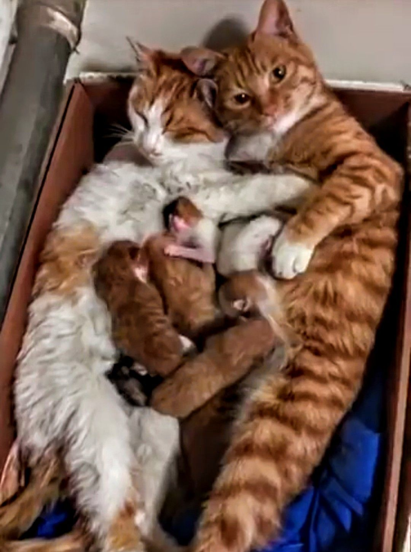 Orange cats with tiny babies cats catfamily feline