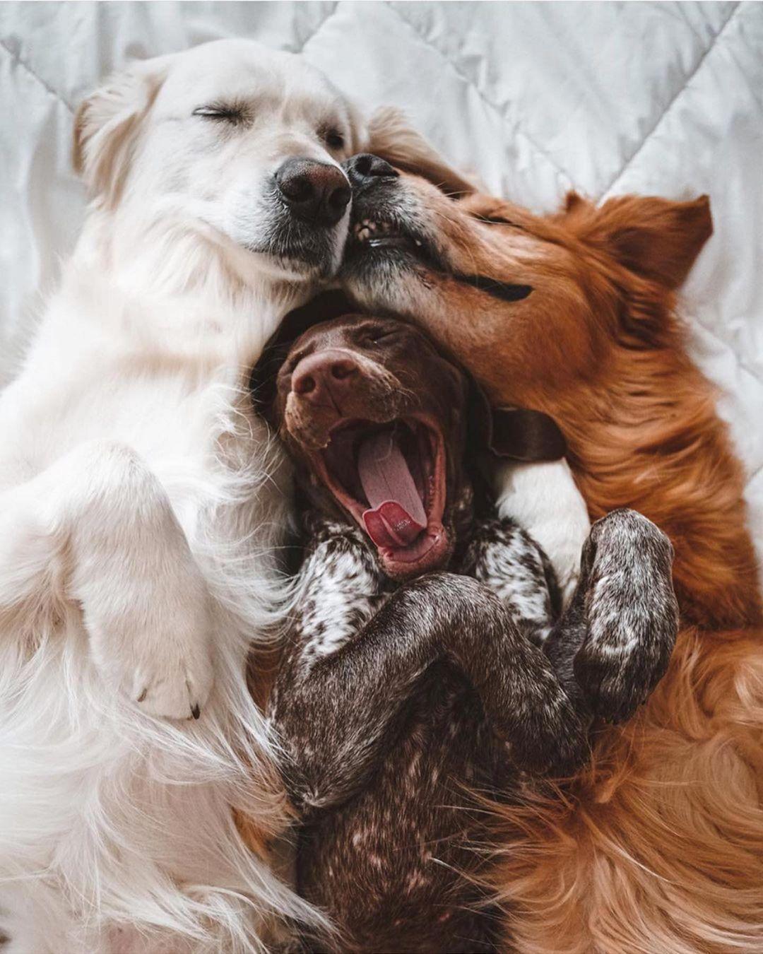 490 vind-ik-leuks, 8 opmerkingen - German Shorthaired Pointer (@gsplover.ig) op Instagram: 'Fast friends with the newest family member. @wat.ki . . . . . #pointeroftheday #puppyyoftheday…'