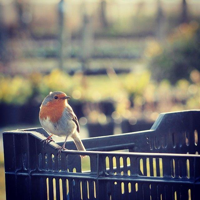 Our #ConstantCompanion whilst working on the nursery #Robin