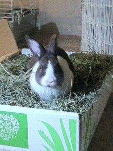 Clover The Rabbit Reviews Small Pet Select Timothy Hay