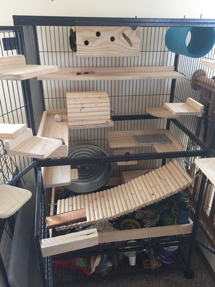 Awesome Chinchilla Cage Setup With Lots Of Wooden Ledges