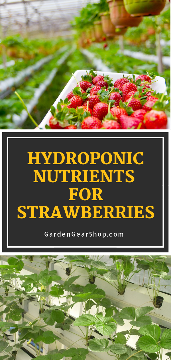 What Hydroponics Solution Works Best For Strawberries Hydroponics Diy Hydroponic Strawberries Hydroponics