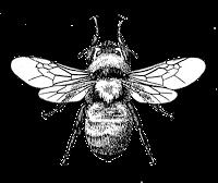 Graphics Printables Bee Images Bee Art Bee