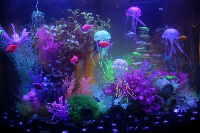 chasing glofish advice aquarium