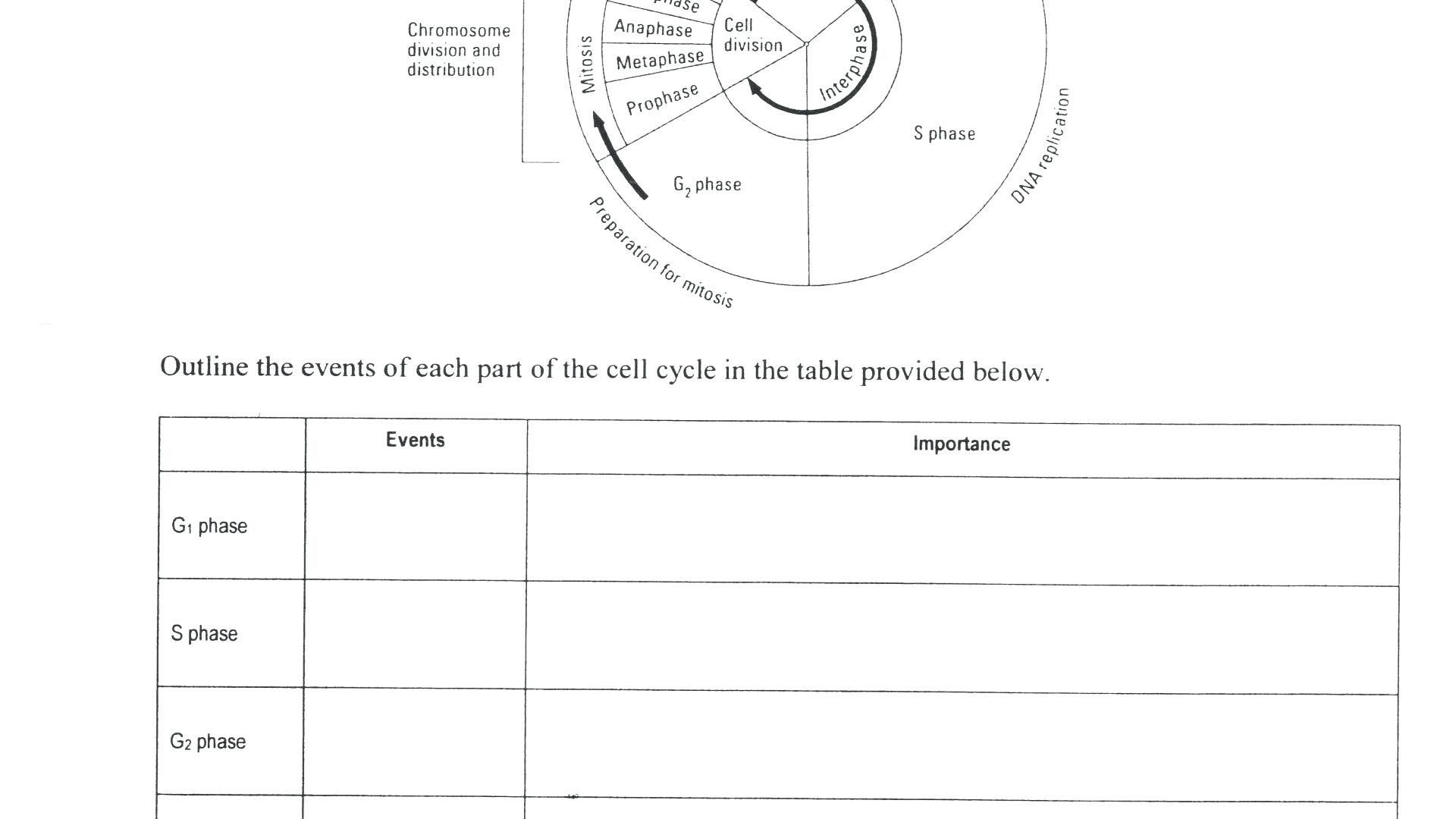 13 Cell Cycle Coloring Worksheet Simbologia