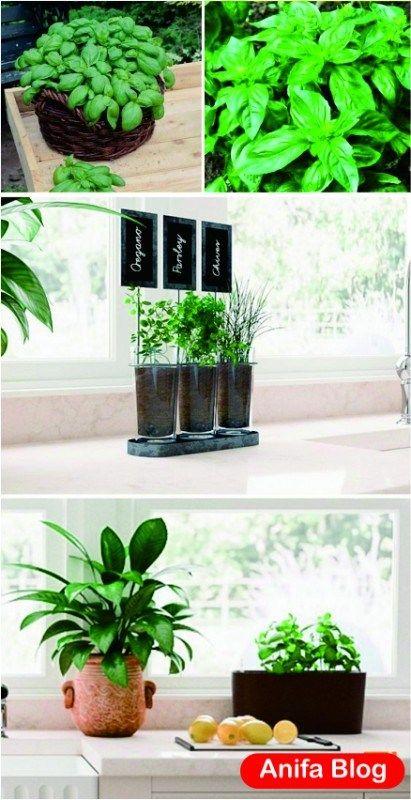 17 Tips Fun And Easy Diy Indoor Herbs Garden Ideas 400 x 300