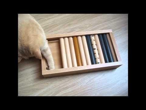 Futter Intelligenzbox Fur Katzen Selber Bauen Katzen Katzen Zeug Katzen Hacks