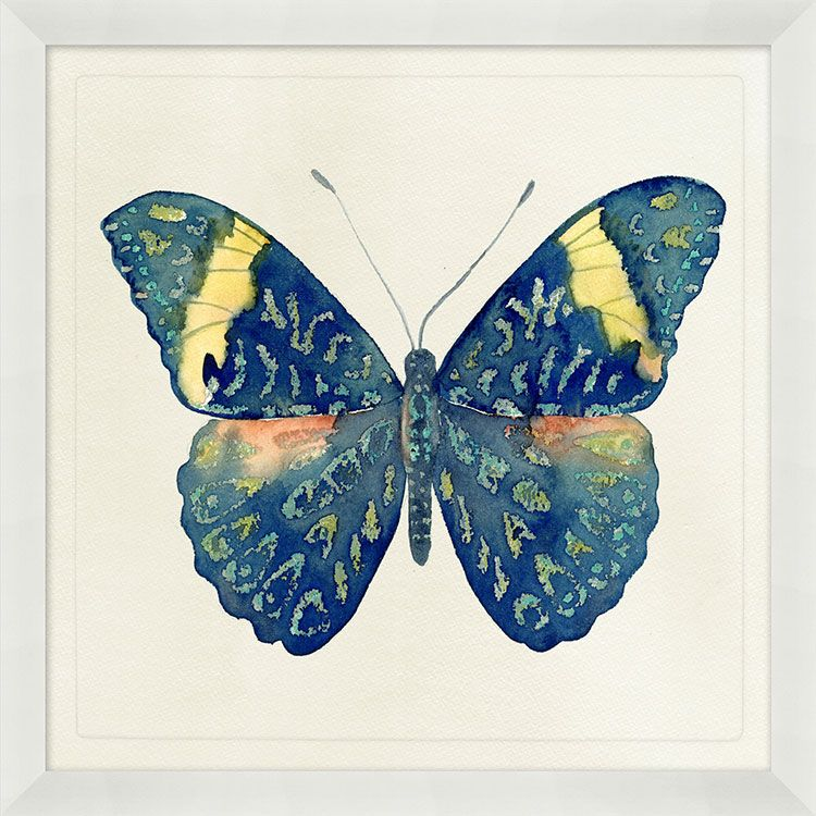 Watercolor Butterfly Framed Prints | Art Gallery | Pinterest
