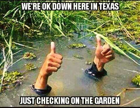 d258381331346042b0bda60d5a295063 texas flood meme memes n' funny stuff pinterest texas flood,Houston Flood Meme