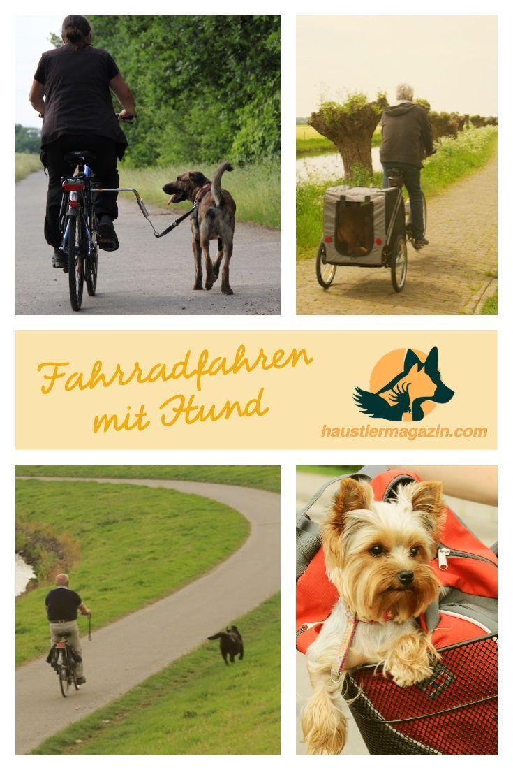 Fahrradfahren mit Hund eine Übersicht Fahrrad fahren