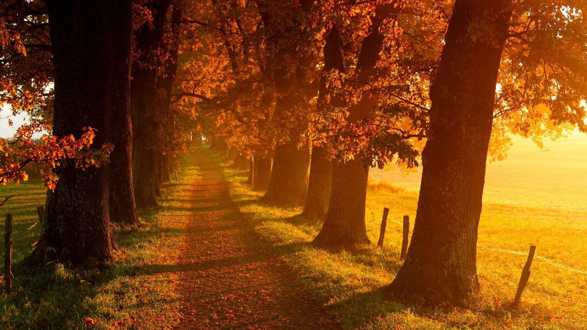 Autumn Wallpapers 3 Jpg 1920 1080 Autumn Scenery Autumn Landscape Landscape Wallpaper