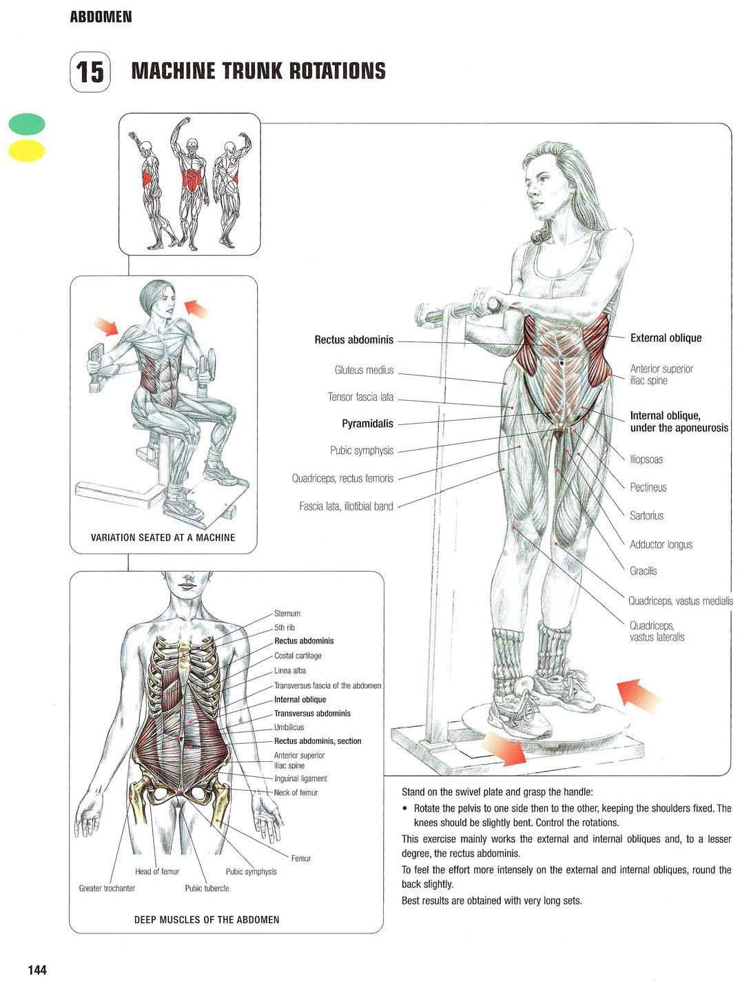 Strength training anatomy 15. Machine Trunk Rotations Abs, core, six ...
