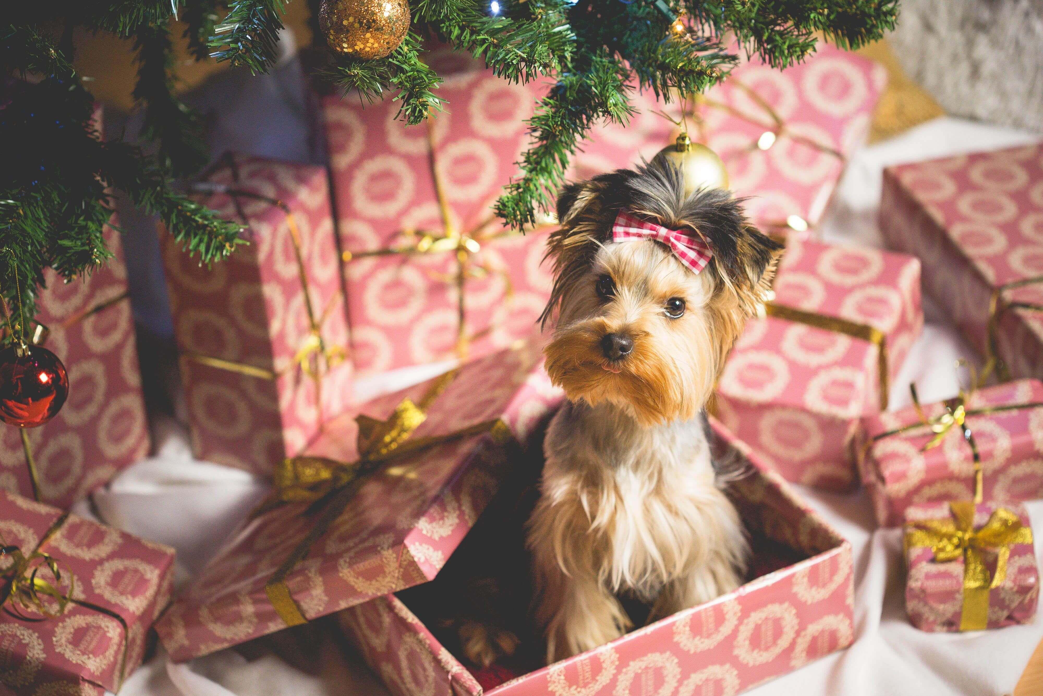 ¡Ya está aquí la Navidad! El nuevo post del blog No Te Puede Faltar