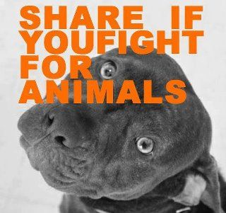 Fight against animal abuse.