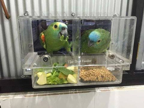 The Duo Feeder Exclusive Only From The Parrot Package Now We Have A Duo Feeder That Comes Can Dogs Eat Blueberries Can Dogs Eat Oranges Cheap Dog Food