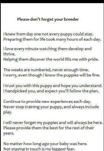 Don T Forget Breeder Breeders Rainbow Bridge Poem Cool Pets