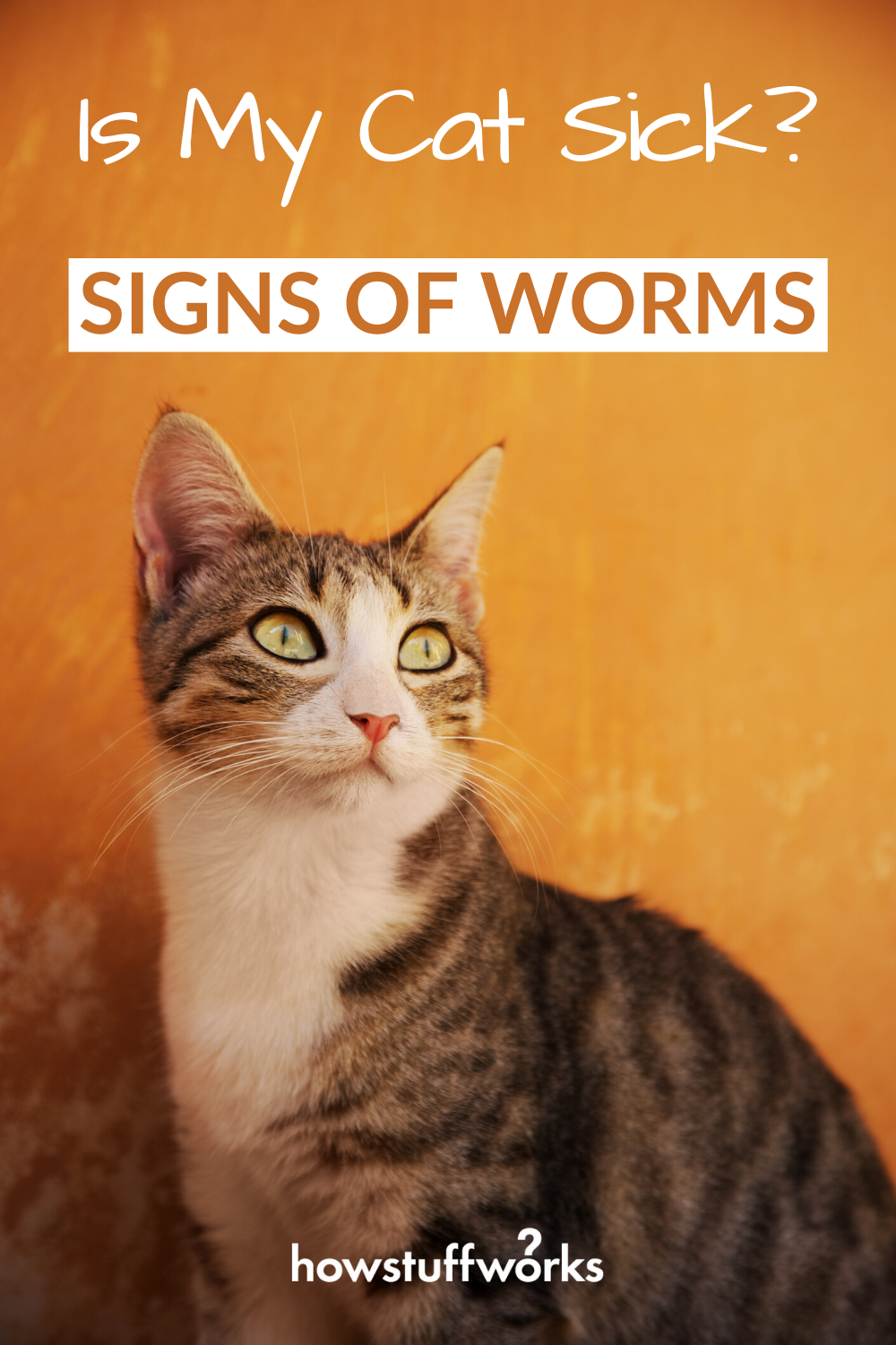 Home Remedies For Cats With Worms In 2020 Cats Home Remedies Cat Care