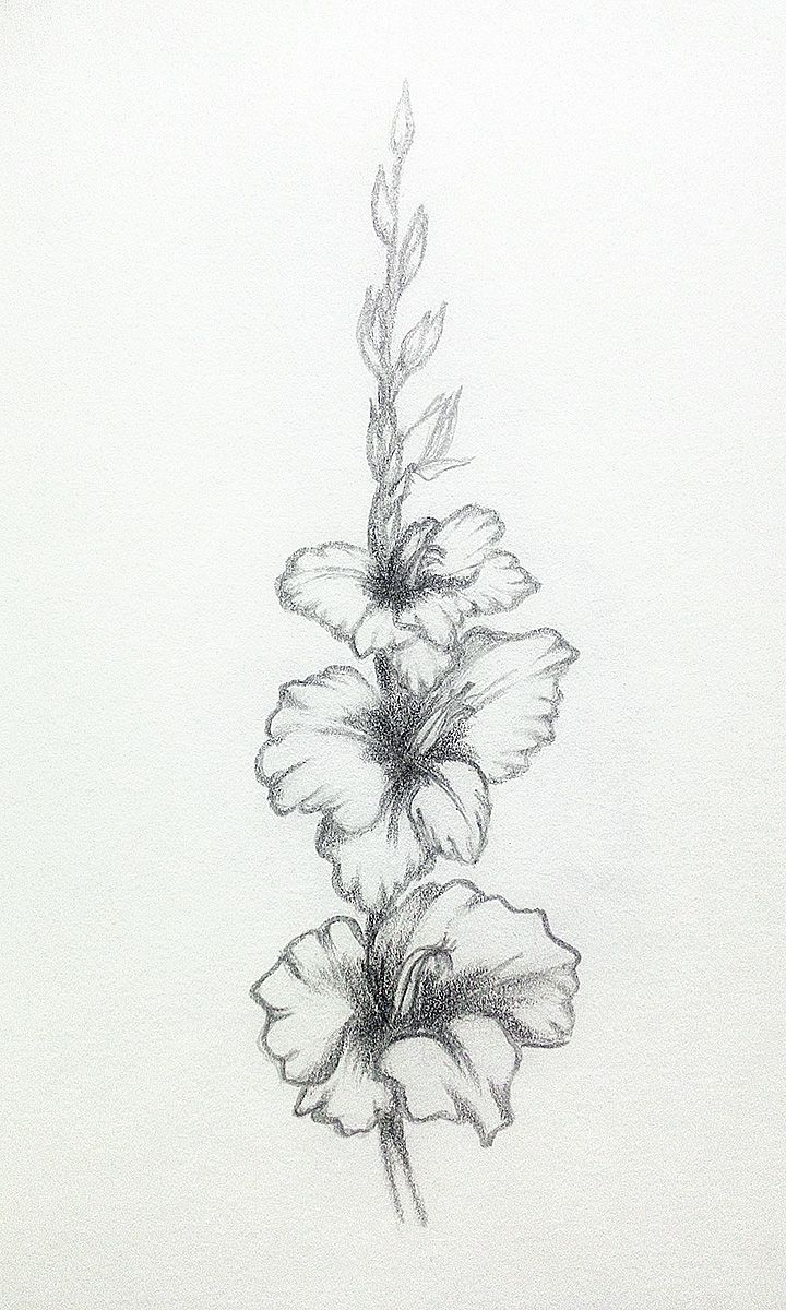 My Practice Pencildrawings Florals Gladiolus Pencil Drawings Of Flowers Gladiolus Tattoo Flower Sketches
