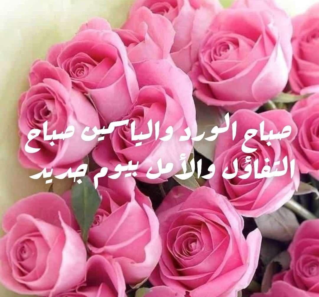 صباح الشهد والعسل صباح الحب والغزل صباح مصحوب بالامل صباح الورد يا عسل Flowers Rose Plants