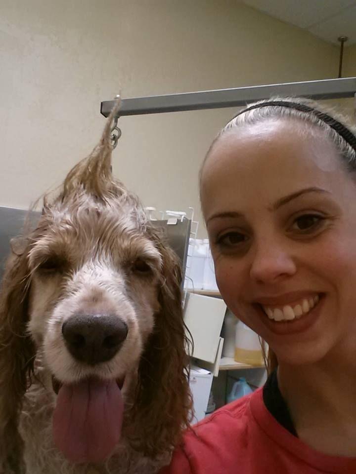 Animal hospital at tatum ranch grooming animal
