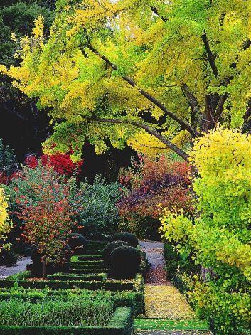 Ginkgo Biloba Is A Beautiful Iconic Tree Summer Plants Landscape Foliage