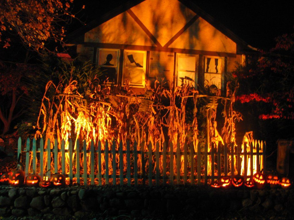 Line front yard with corn stalks and creepy lights. This