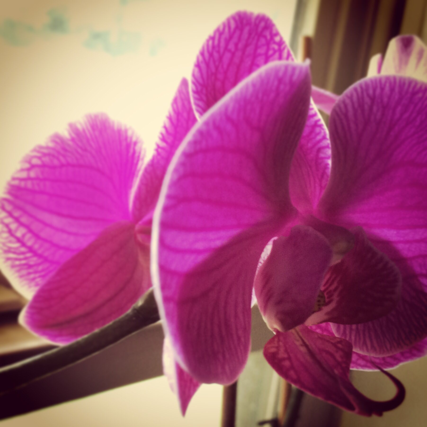 Orchids in the window that make me smile.. The fuscia beauty..