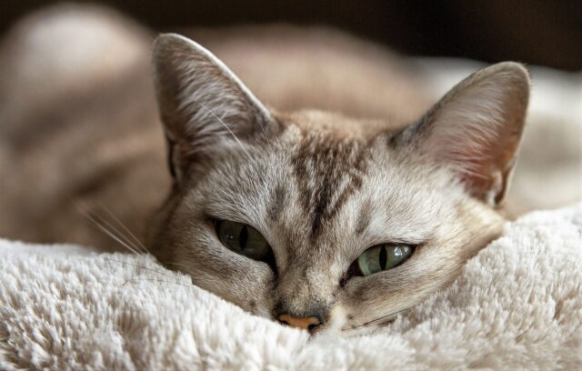 9 Rules Of Feline Speak Learn To Communicate With Your Cat Cat Cold Old Cats Pets