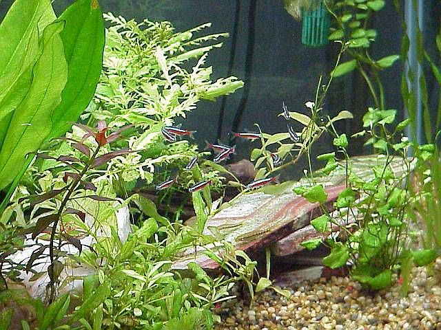 Have a natural looking fishtank i 39 d like some small fish for Natural fish tank